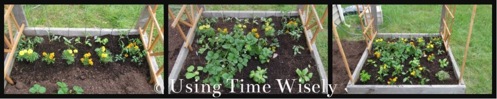 2013: Garden Journal - May Edition